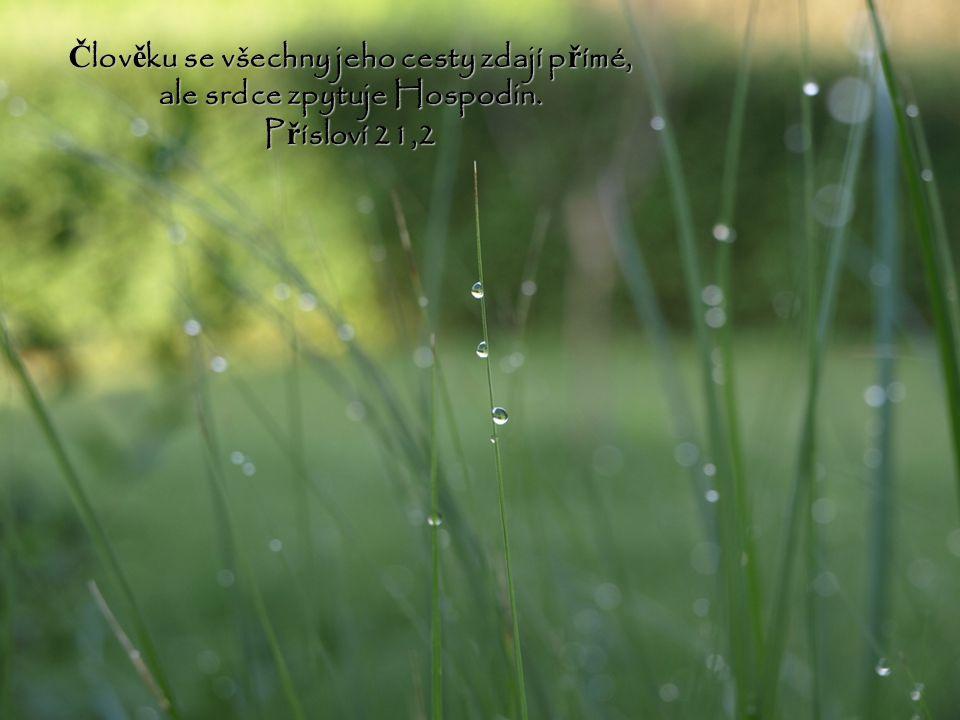 Člověku se všechny jeho cesty zdají přímé, ale srdce zpytuje Hospodin.