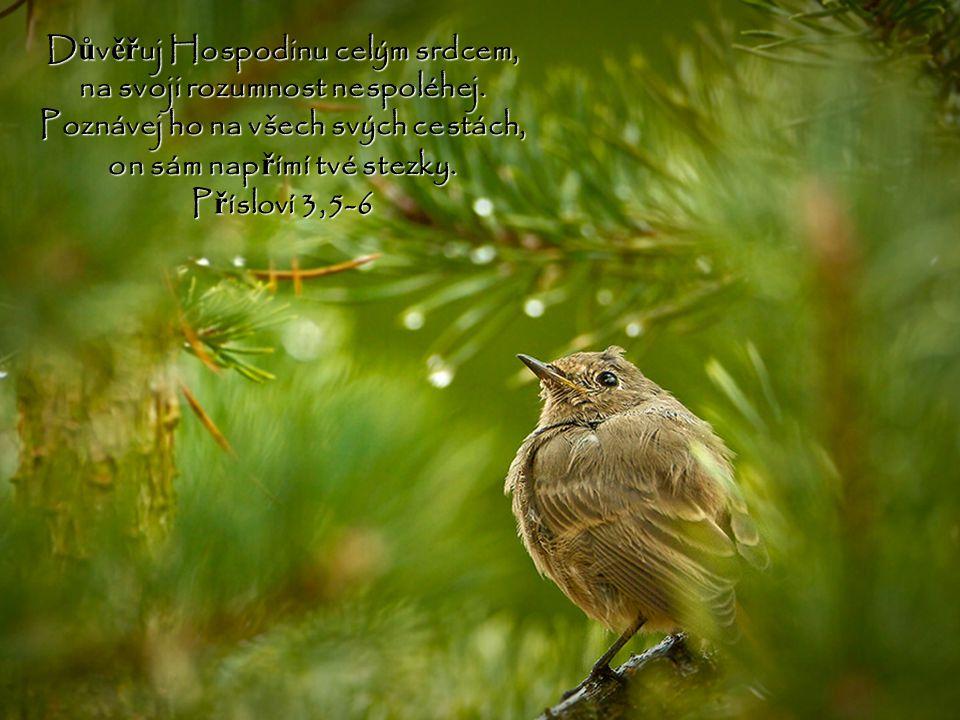 Důvěřuj Hospodinu celým srdcem, na svoji rozumnost nespoléhej.