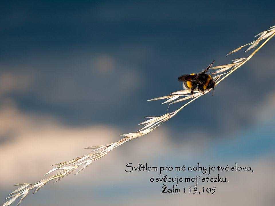 Světlem pro mé nohy je tvé slovo, osvěcuje moji stezku.