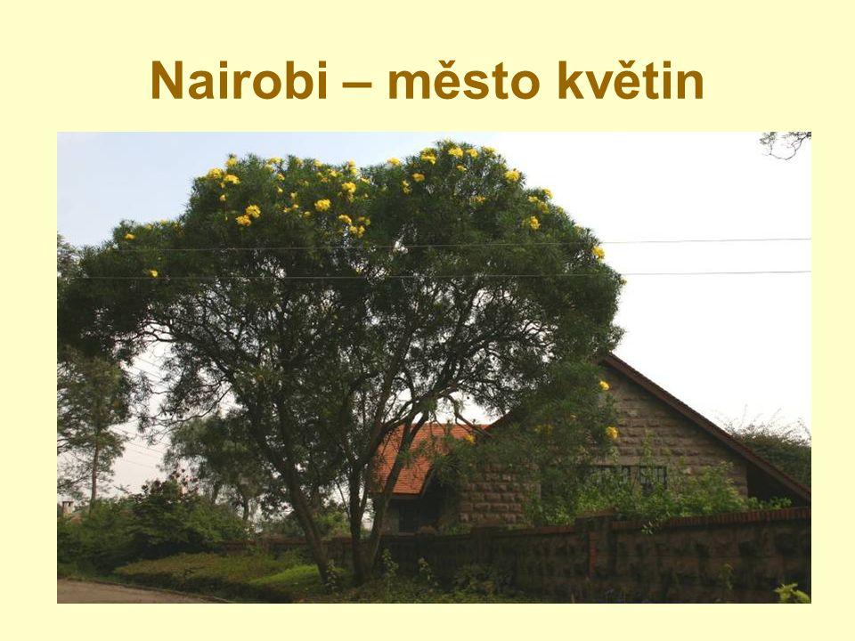 Nairobi – město květin