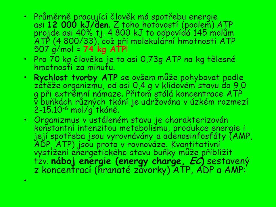 Průměrně pracující člověk má spotřebu energie asi 12 000 kJ/den