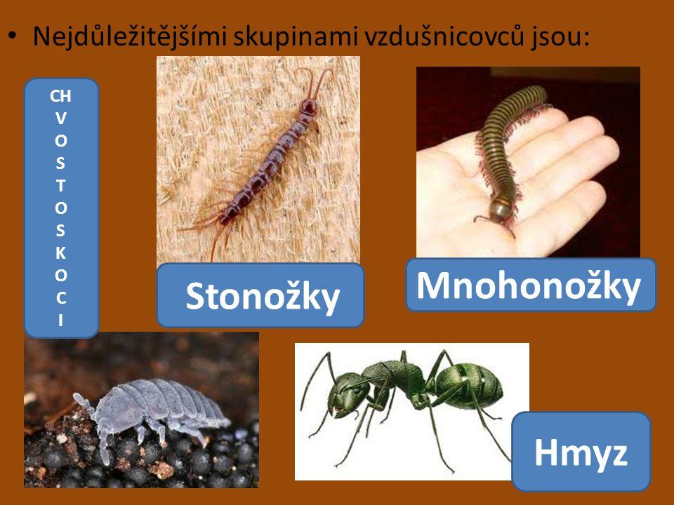 Mnohonožky Stonožky Hmyz Nejdůležitějšími skupinami vzdušnicovců jsou: