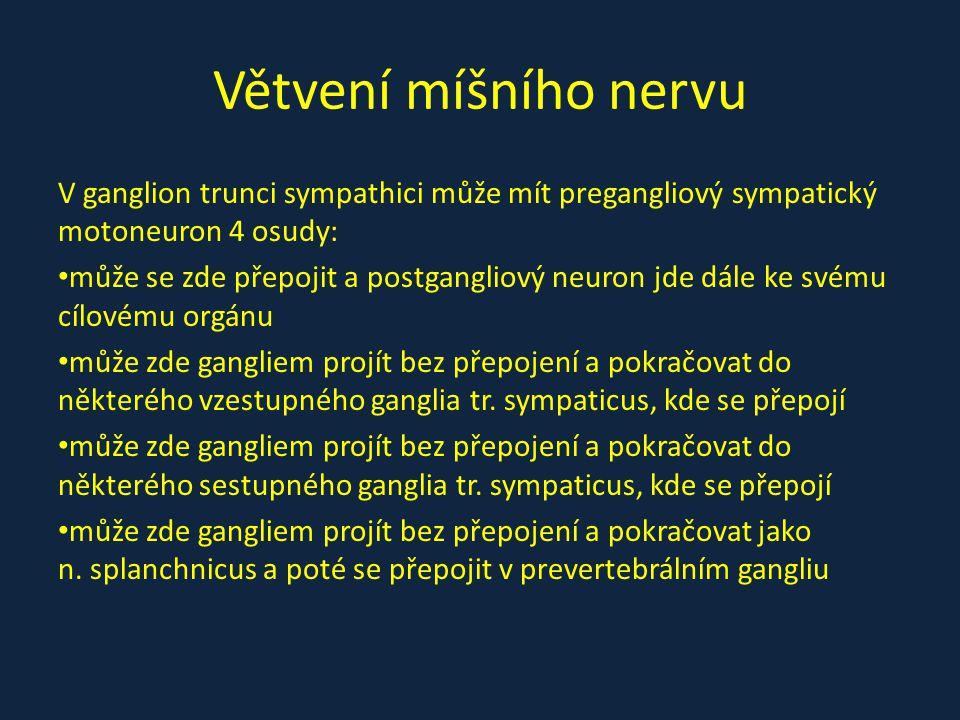 Větvení míšního nervu V ganglion trunci sympathici může mít pregangliový sympatický motoneuron 4 osudy: