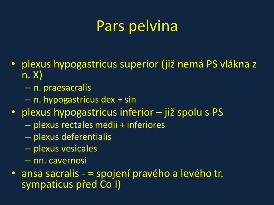 Pars pelvina plexus hypogastricus superior (již nemá PS vlákna z n. X)