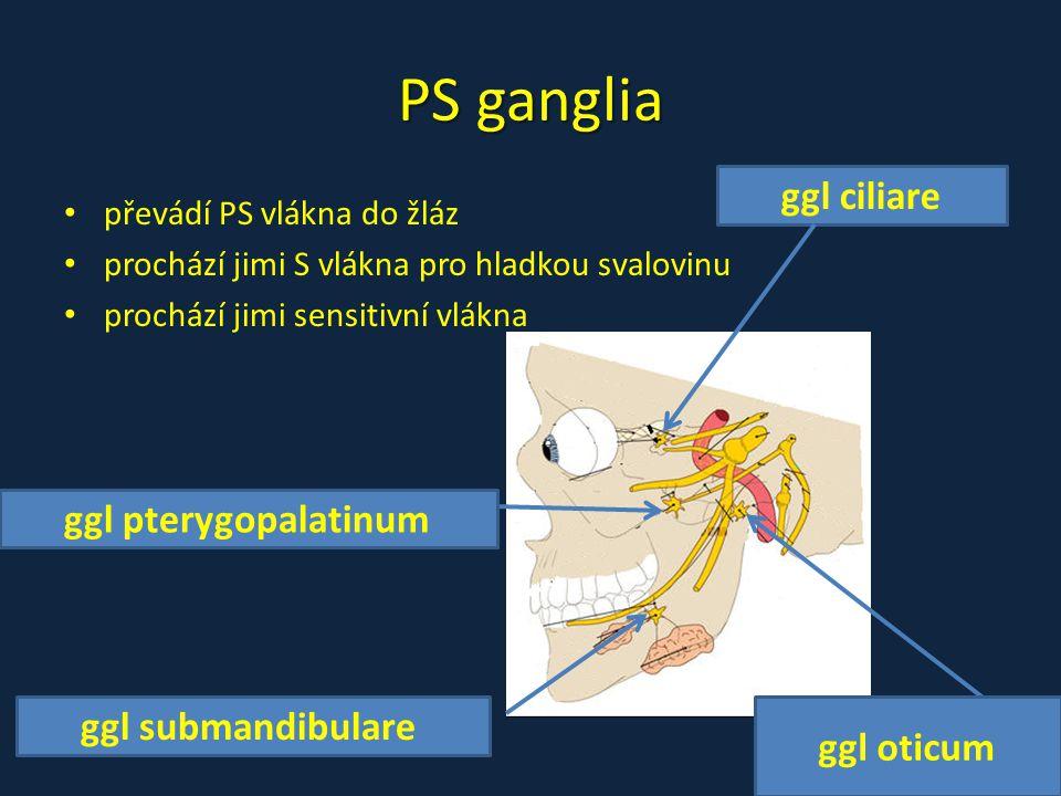 PS ganglia ggl ciliare ggl pterygopalatinum ggl submandibulare