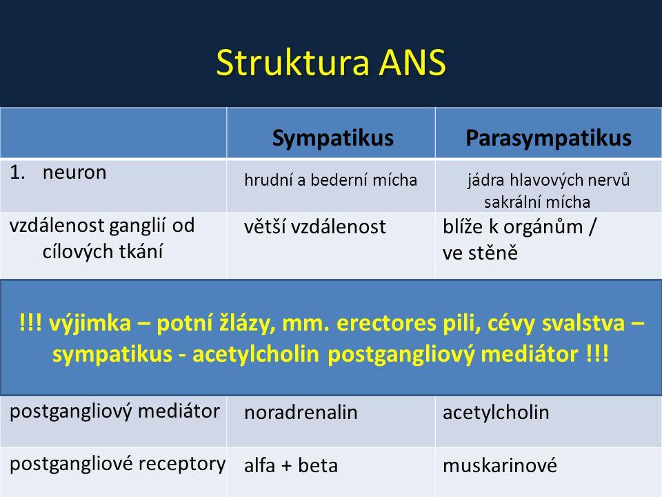Struktura ANS Sympatikus Parasympatikus