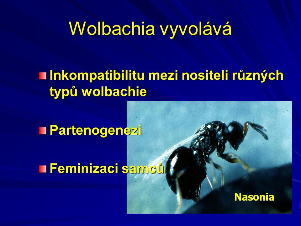 Wolbachia vyvolává Inkompatibilitu mezi nositeli různých typů wolbachie. Partenogenezi. Feminizaci samců.