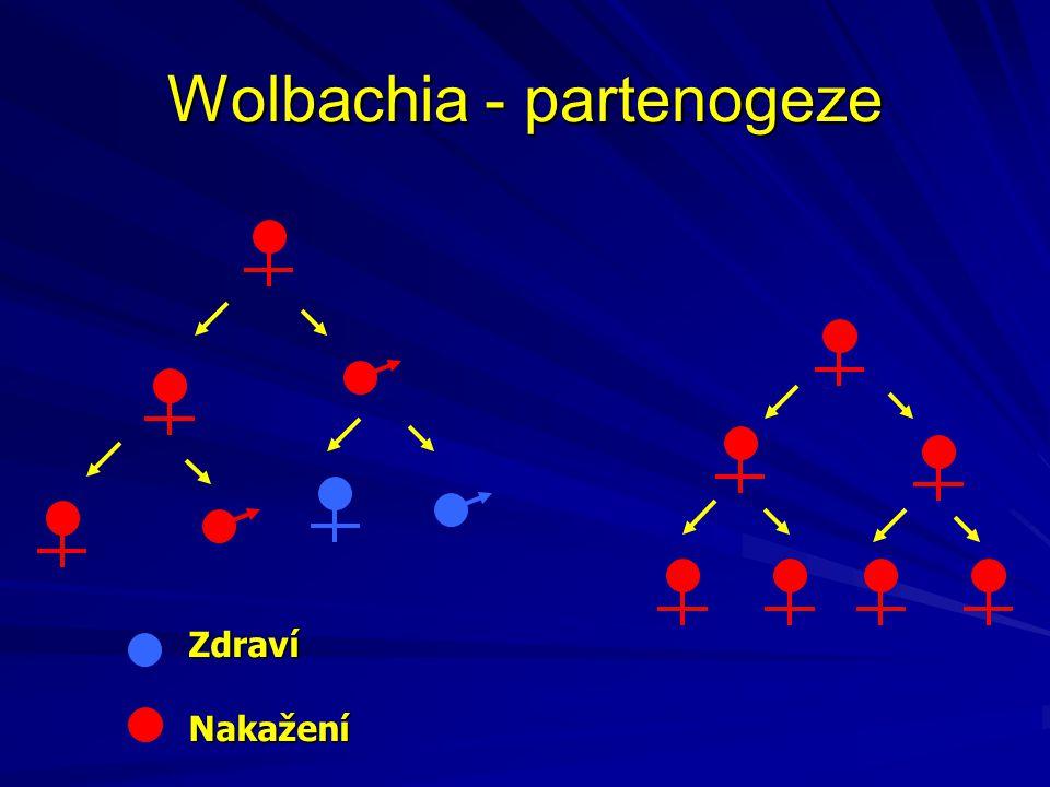 Wolbachia - partenogeze