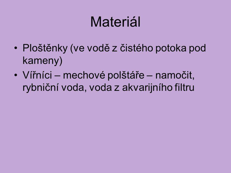 Materiál Ploštěnky (ve vodě z čistého potoka pod kameny)