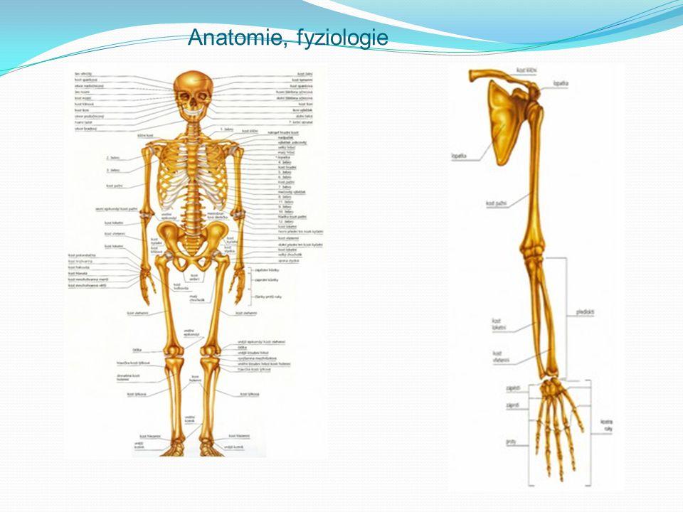 Anatomie, fyziologie