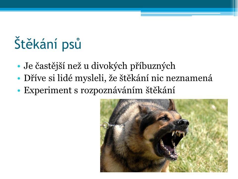 Štěkání psů Je častější než u divokých příbuzných