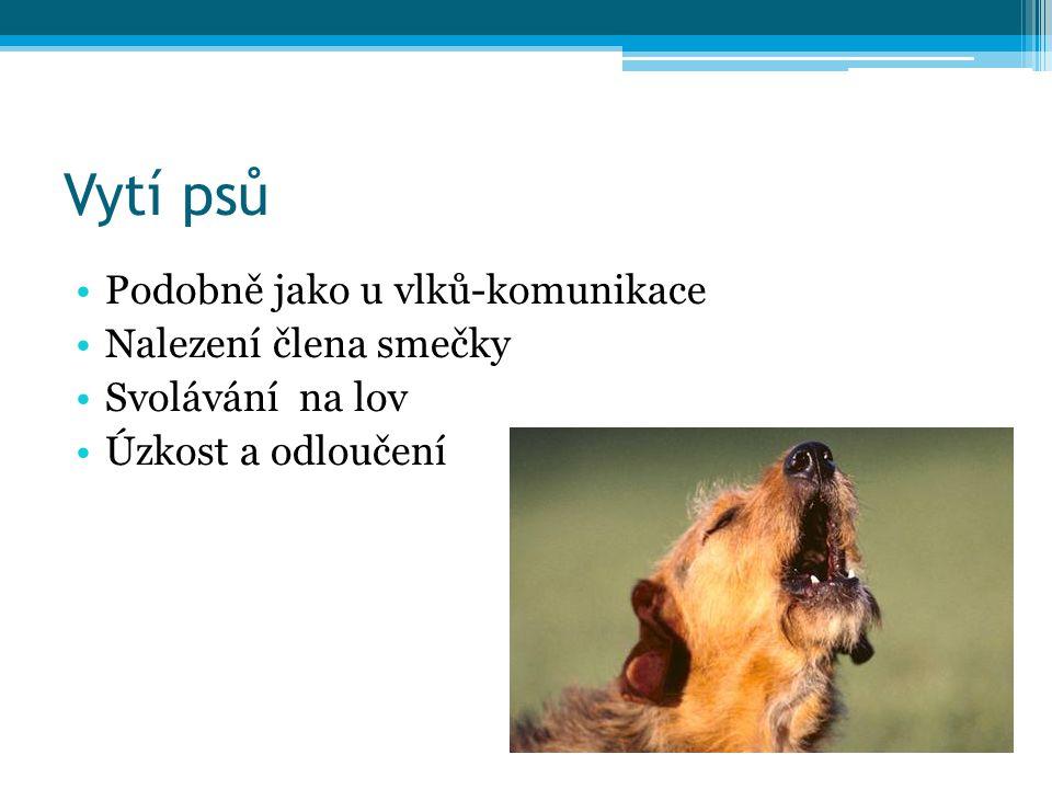 Vytí psů Podobně jako u vlků-komunikace Nalezení člena smečky