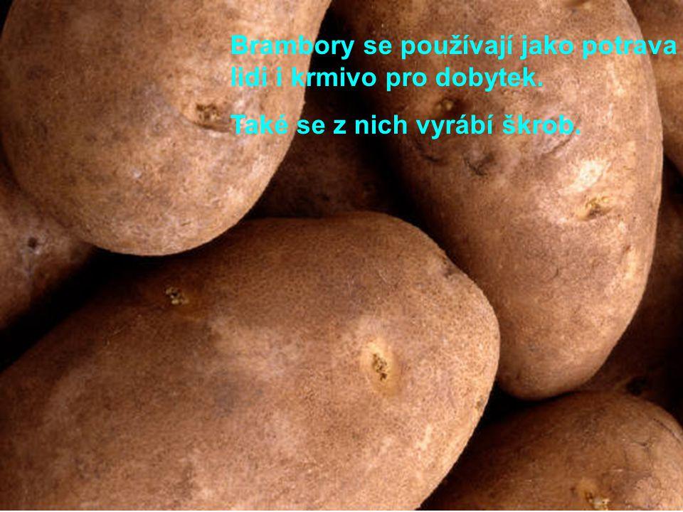 Brambory se používají jako potrava pro lidi i krmivo pro dobytek.