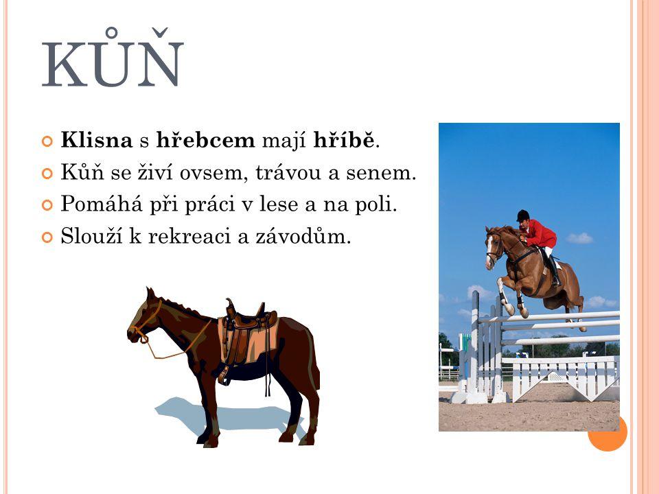 KŮŇ Klisna s hřebcem mají hříbě. Kůň se živí ovsem, trávou a senem.