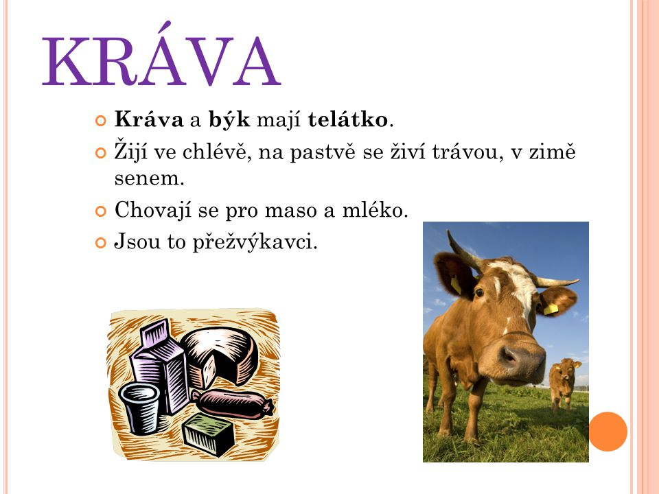 KRÁVA Kráva a býk mají telátko.