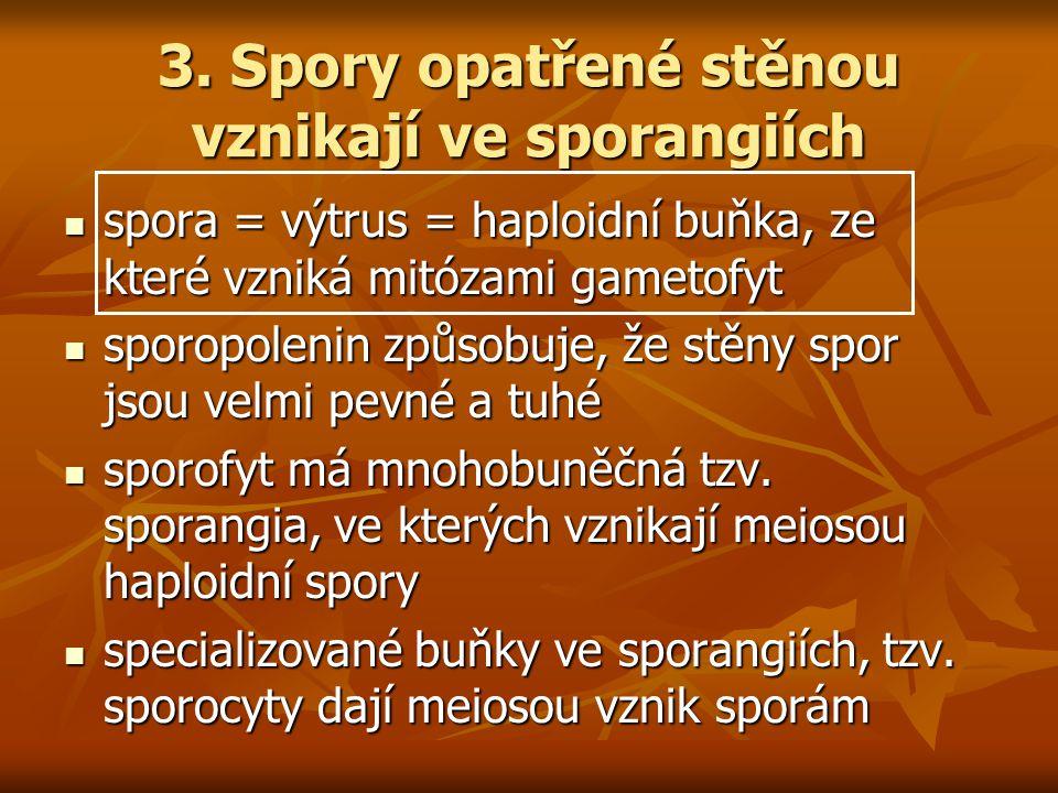 3. Spory opatřené stěnou vznikají ve sporangiích