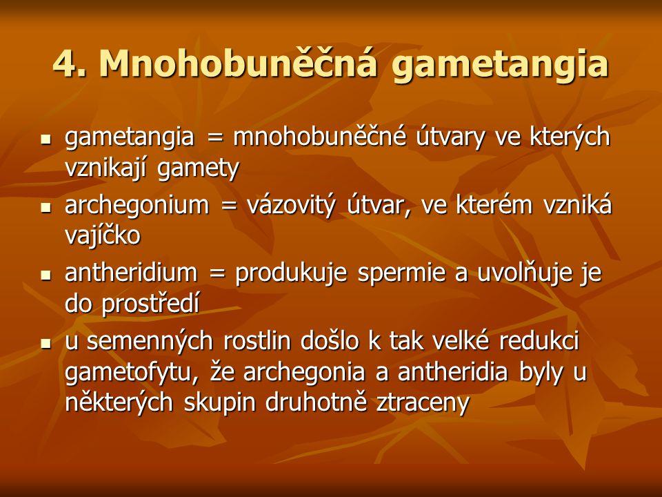 4. Mnohobuněčná gametangia