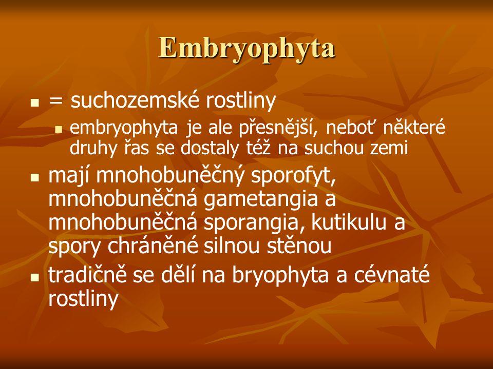Embryophyta = suchozemské rostliny