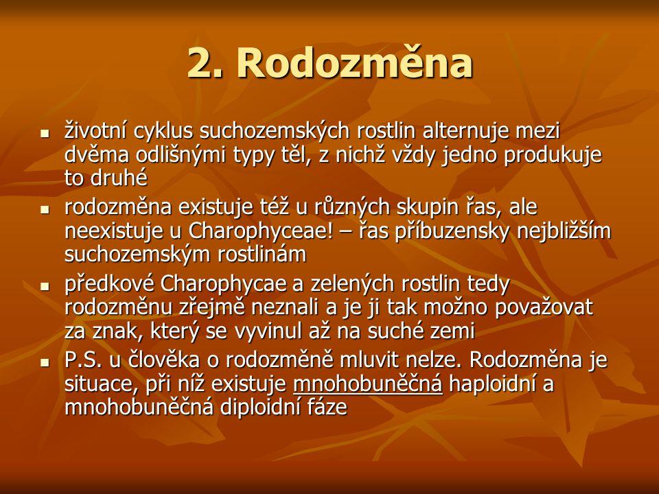 2. Rodozměna životní cyklus suchozemských rostlin alternuje mezi dvěma odlišnými typy těl, z nichž vždy jedno produkuje to druhé.