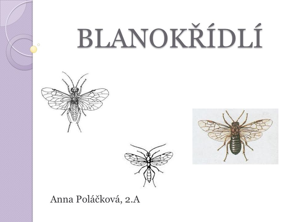 BLANOKŘÍDLÍ Anna Poláčková, 2.A