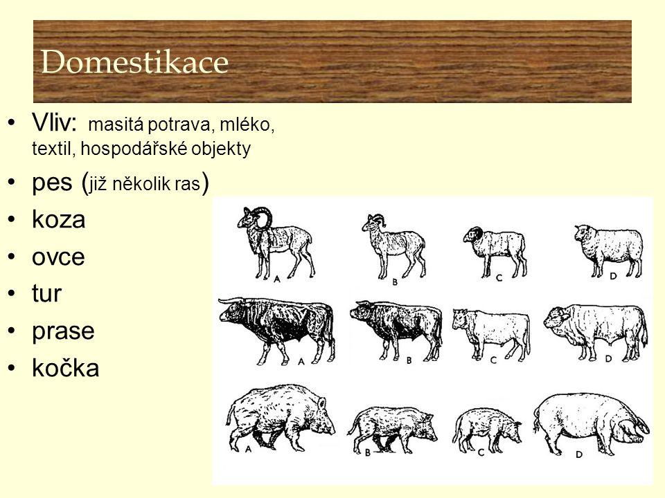 Domestikace Vliv: masitá potrava, mléko, textil, hospodářské objekty