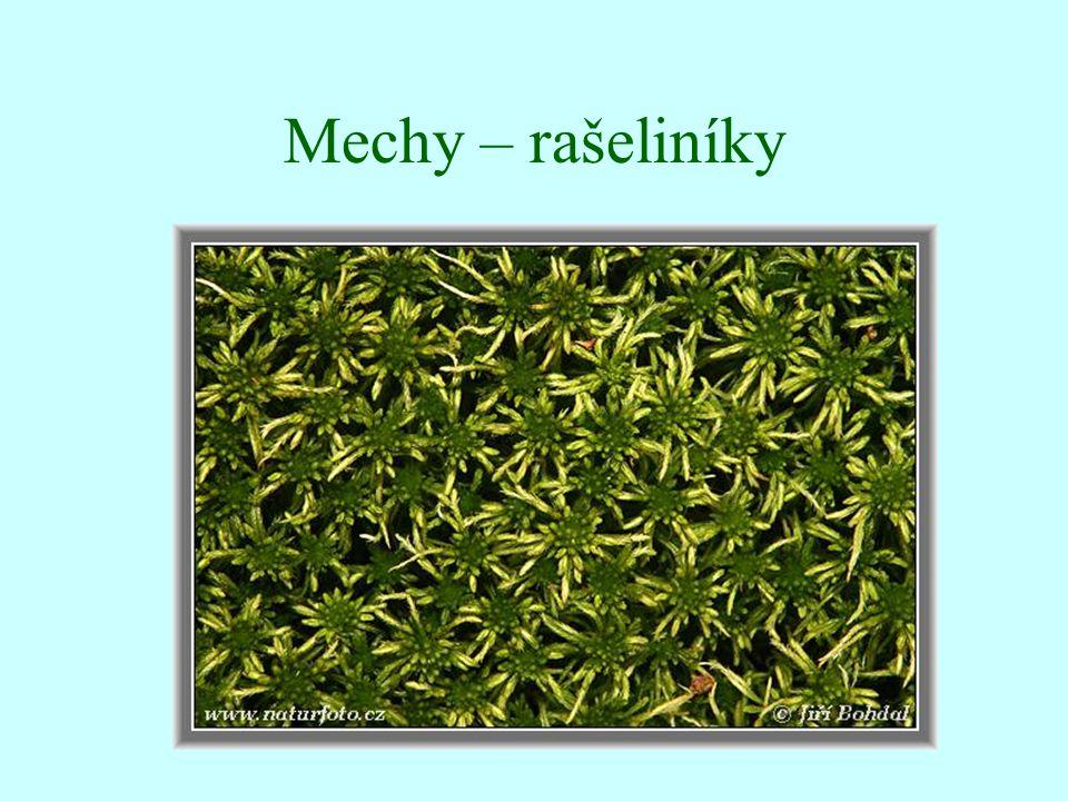 Mechy – rašeliníky