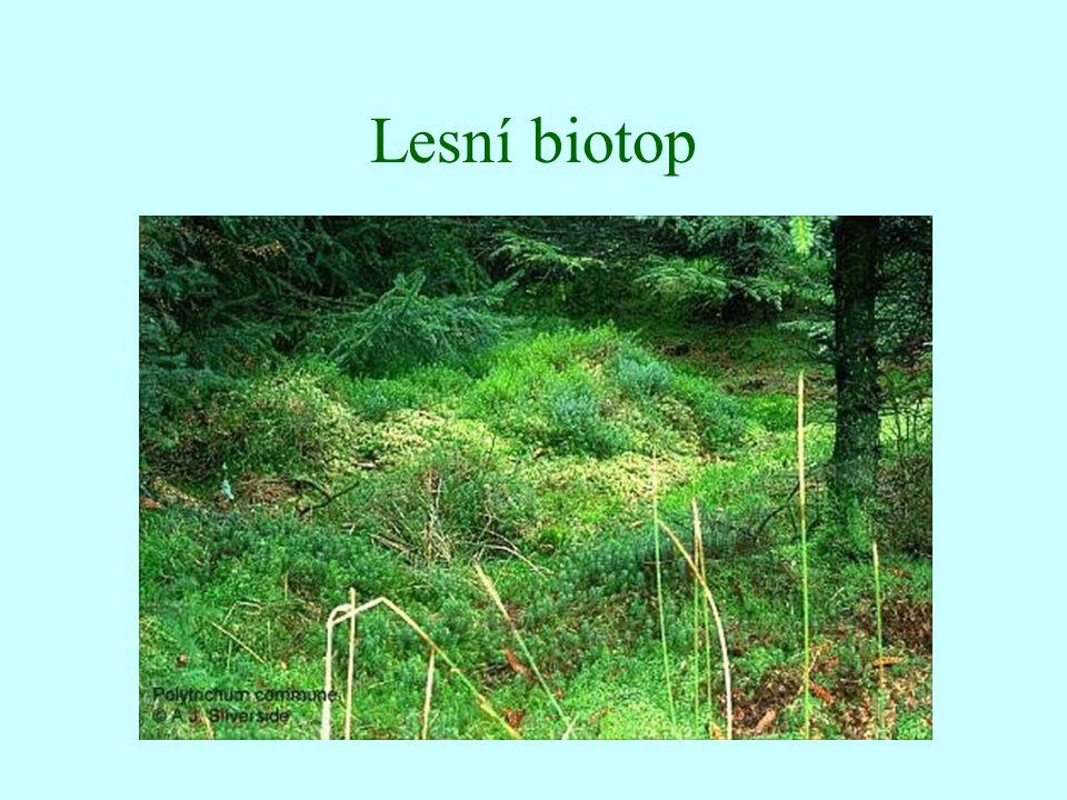 Lesní biotop
