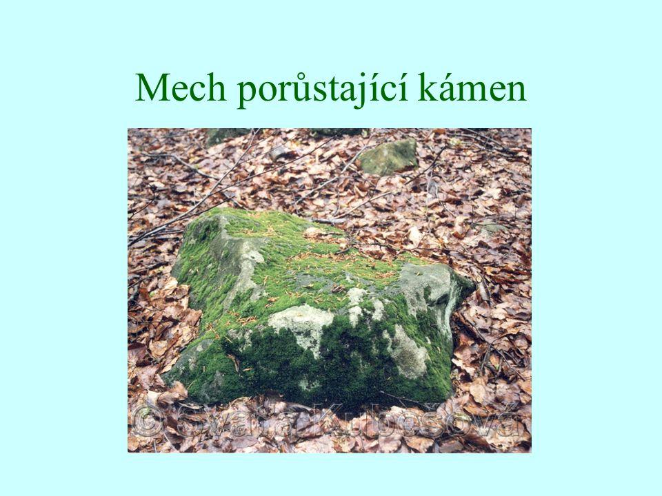 Mech porůstající kámen