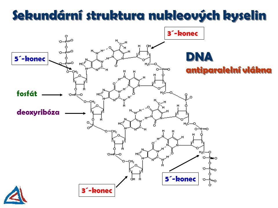 Sekundární struktura nukleových kyselin