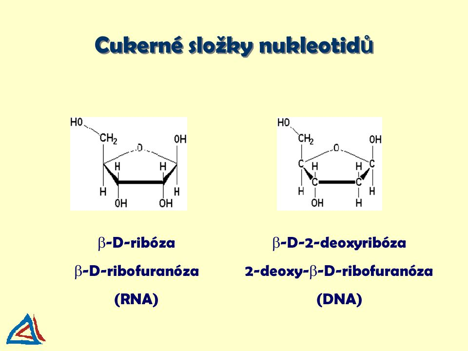 Cukerné složky nukleotidů