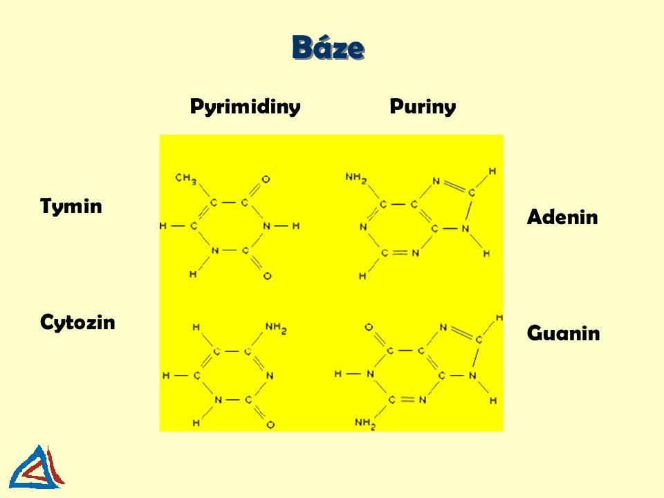 Báze Pyrimidiny Puriny Tymin Adenin Cytozin Guanin