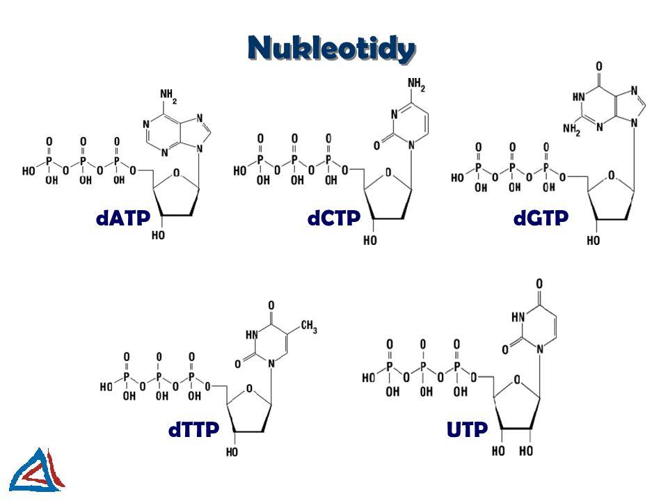 Nukleotidy dATP dCTP dGTP dTTP UTP