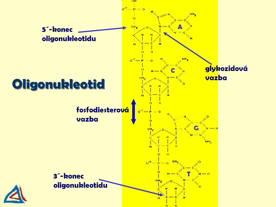 Oligonukleotid 5´-konec oligonukleotidu glykozidová vazba