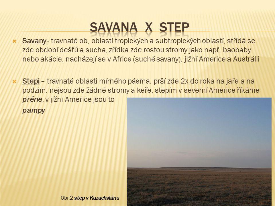 Savana x Step