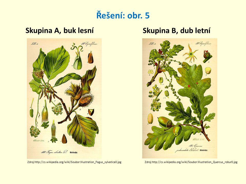 Řešení: obr. 5 Skupina A, buk lesní Skupina B, dub letní