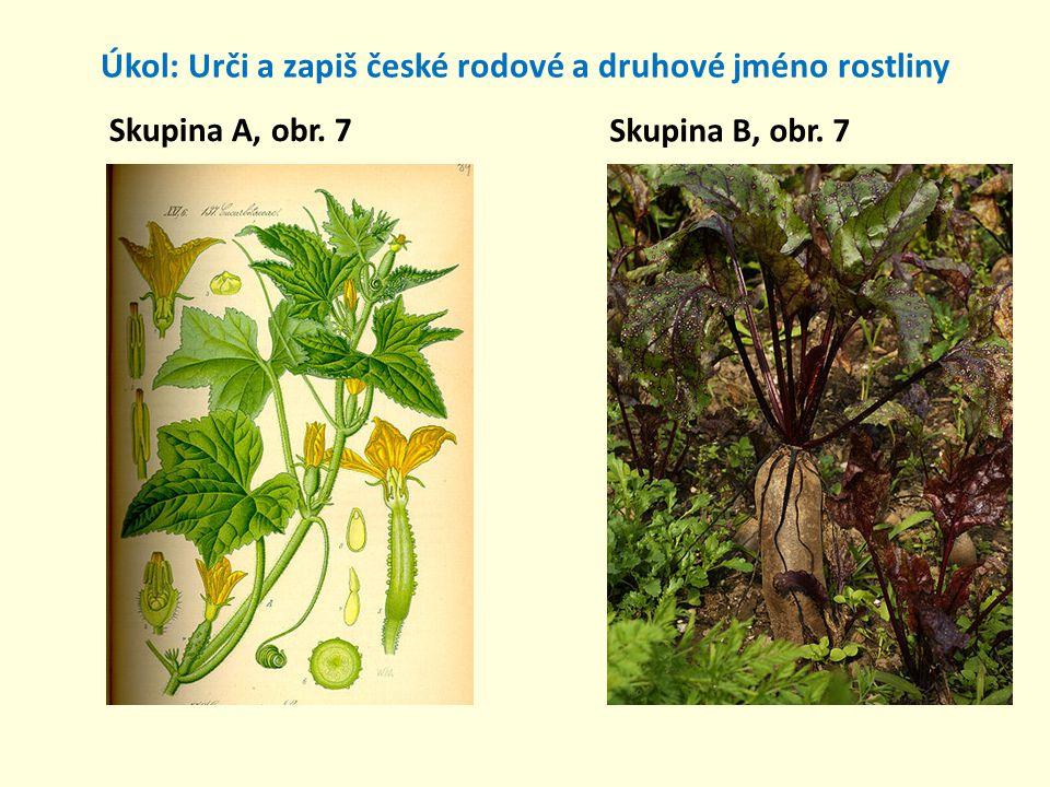 Úkol: Urči a zapiš české rodové a druhové jméno rostliny