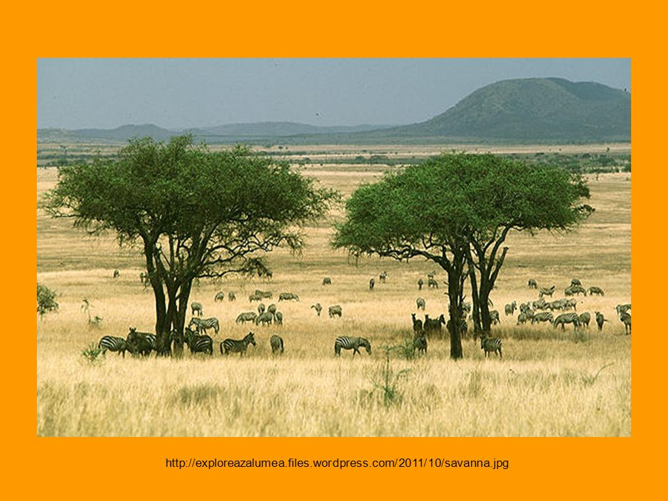 http://exploreazalumea.files.wordpress.com/2011/10/savanna.jpg