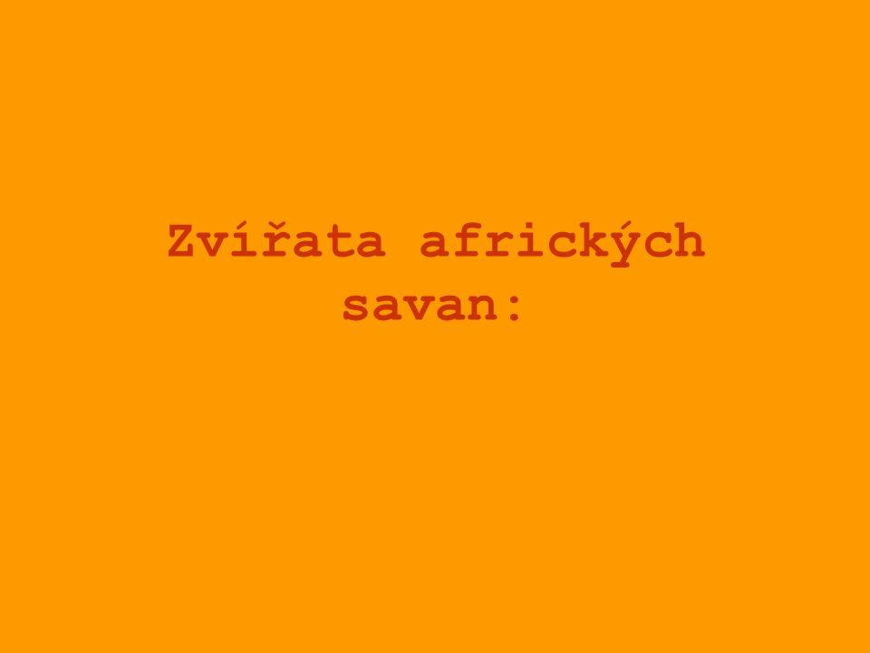 Zvířata afrických savan: