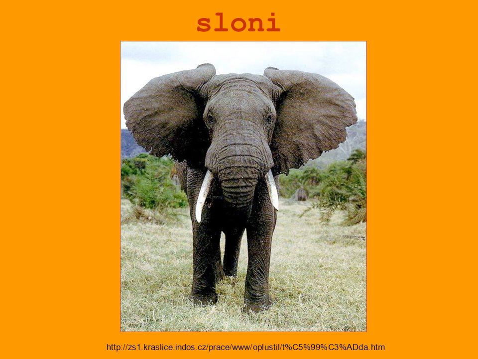sloni http://zs1.kraslice.indos.cz/prace/www/oplustil/t%C5%99%C3%ADda.htm