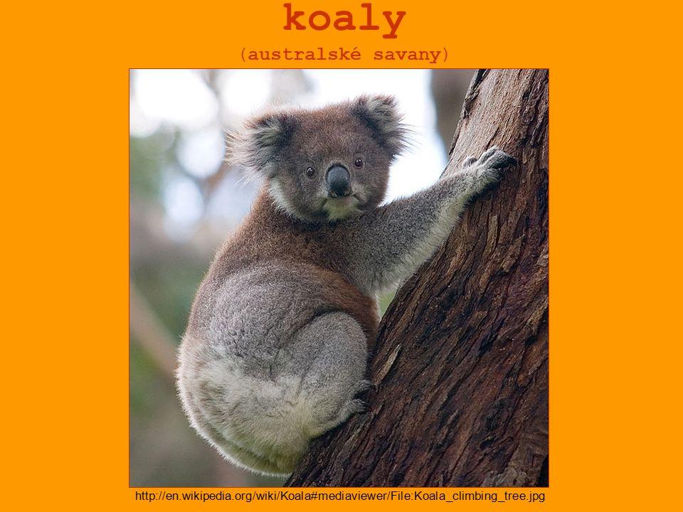 koaly (australské savany)