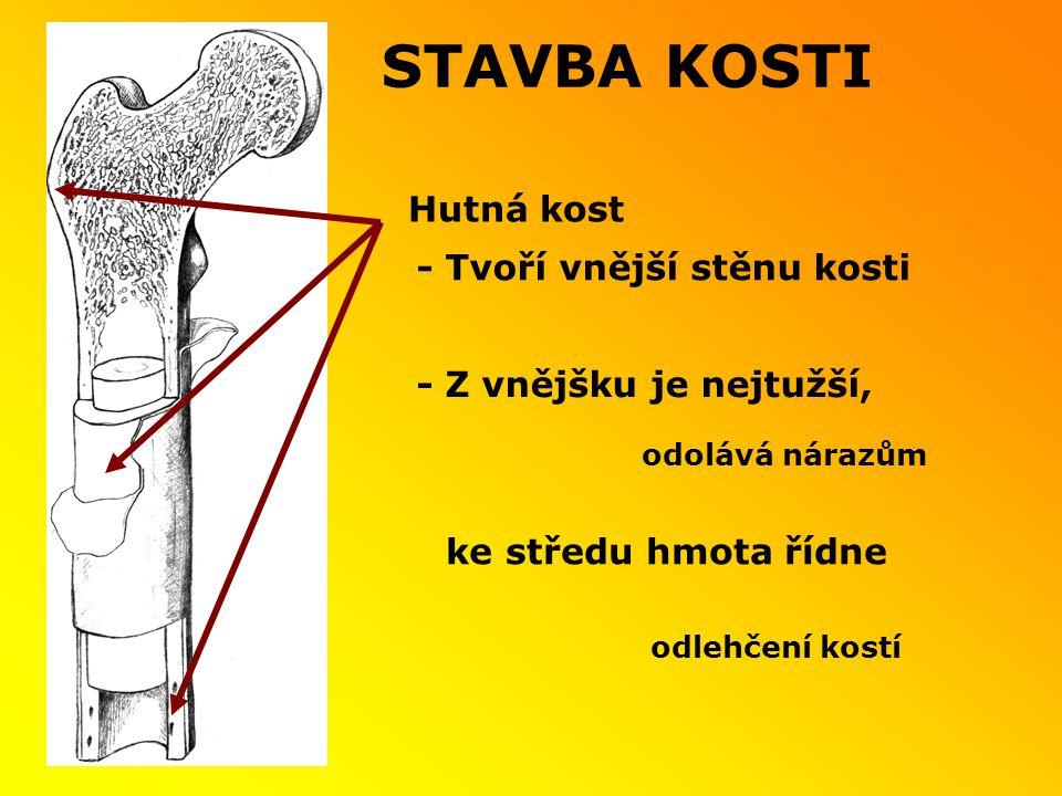 STAVBA KOSTI Hutná kost - Tvoří vnější stěnu kosti