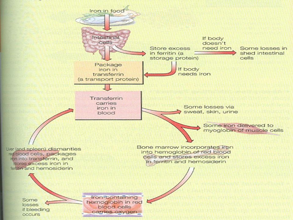 Vložit obrázek stran431 underatanding nutrition