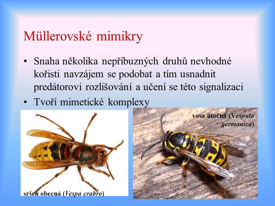 Müllerovské mimikry