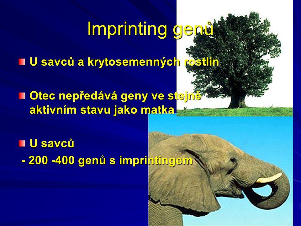 Imprinting genů U savců a krytosemenných rostlin