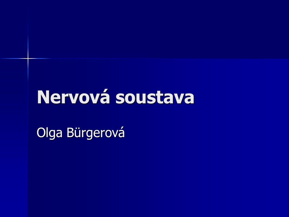 Nervová soustava Olga Bürgerová