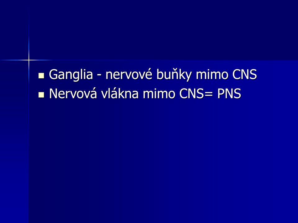 Ganglia - nervové buňky mimo CNS