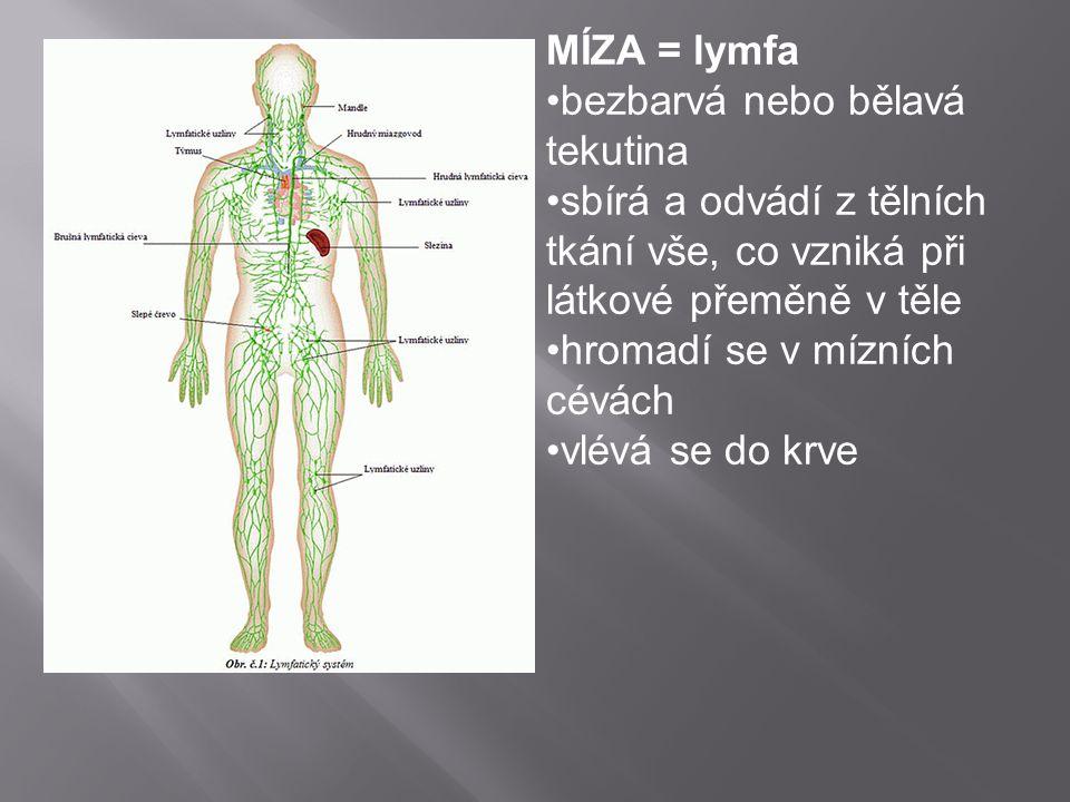 MÍZA = lymfa bezbarvá nebo bělavá tekutina. sbírá a odvádí z tělních tkání vše, co vzniká při látkové přeměně v těle.