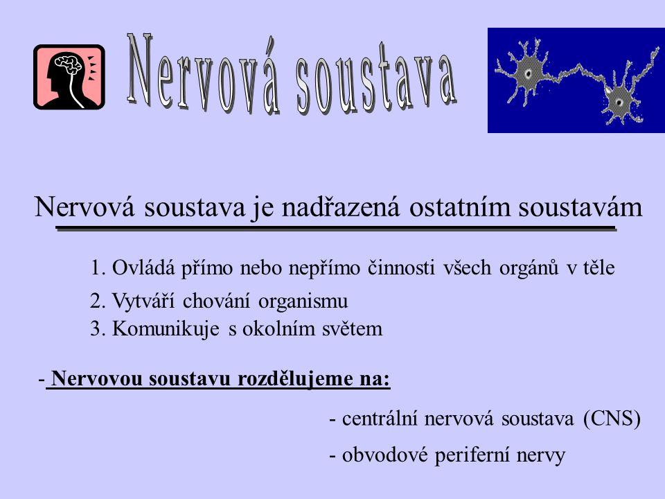Nervová soustava Nervová soustava je nadřazená ostatním soustavám