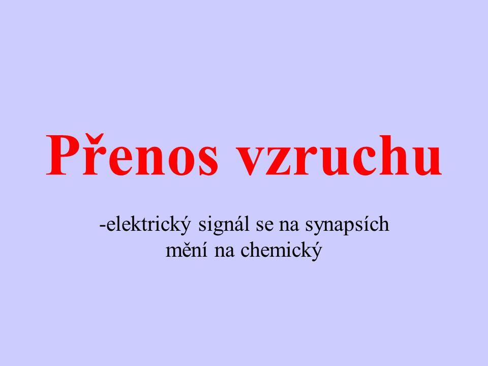 elektrický signál se na synapsích mění na chemický