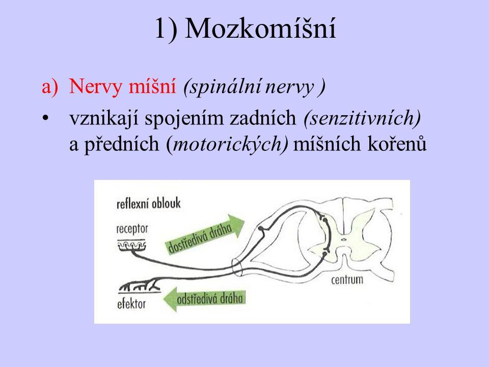 1) Mozkomíšní Nervy míšní (spinální nervy )